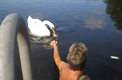 Grace Graham feeding the Mute Swans on Phantom Lake.                                             (Christina Shockley)