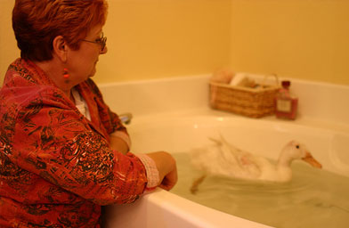 Young's mom looks on as the Pekin Duck they rescued frolicks in her bathtub.                                             (Tiffany Young)