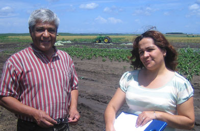 Julio Flores and Marisela Chavez try to convince migrant workers in Beardstown to register and send their children to school. Here they stand in a field of cabbage.                                             (Kelly McEvers)