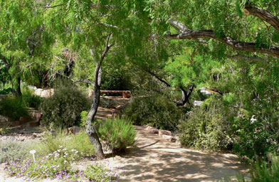 Path at the Springs Preserve garden in Las Vegas, Nev.                                             (Stan Shebs)