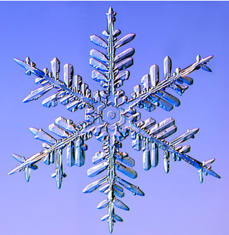 Fernlike stellar dendrites are the largest snow crystals. Libbrecht says they are the best for skiing because they are thin and light, so they make a low-density snowpack.                                             (Kenneth Libbrecht)