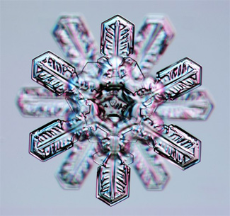 It rarely happens, but sometimes two conjoined six-branch ice crystals can form twelve sided crystal, like the snowflake pictured here.                                             (Kenneth Libbrecht)