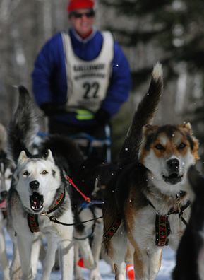 Musher August Galloway leaves the Sawbill Checkpoint on the return leg of the 2004 Beargrease Dog Sled race. The Beargrease is the longest of its kind in the lower 48 states and is a qualifying event for Alaska's Iditarod Sled Dog Race.                                             (Gary Meinz)
