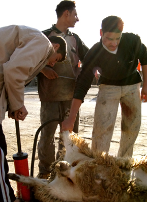 Outside a kabob stand a butcher skins and guts a sheep. Inflating them makes it easier to skin and gut the animal.                                             (Adam Allington)