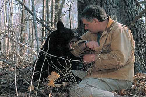Ben Kilham plays with a young black bear cub.                                             (Wildlife Journal)
