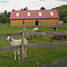 An idyllic setting for a sanctuary farm