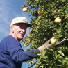 Volunteer Norm Bell collects citrus fruit