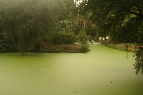 The bayou at Jungle Gardens.                                             (Daniel May)