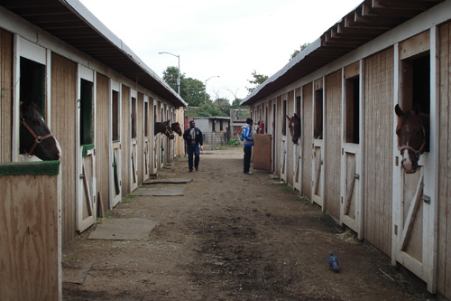 The new stables provide each horse with a 10 by 10 foot stall.                                             (Eric Molinsky)